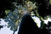 REDD: Nytt Nord-Sydligt avtal om skog och klimat