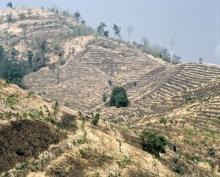 Klimatförändringarna ska motverkas genom kontroll av världens skogar