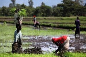 Klimatförändringen och bristande tillgång till mat kan lösas tillsammans