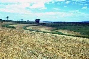 FAO lanserar en ny satsning för att minska utsläppen från jordbruk