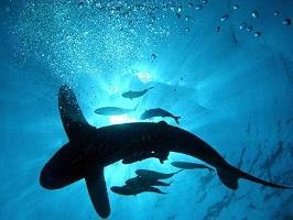 Expertpanel ger rekommendationer om skyddsvärda marina arter