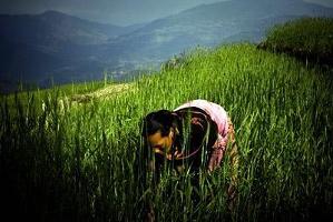 Stöd till ökad matproduktion i Nepal