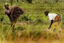 Stöd till landsbygdens kvinnor framgångsrikt recept mot hunger