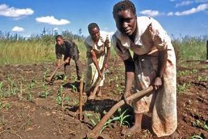 Integration av lokalsamhällen avgörande vid storskaliga markinvesteringar i utvecklingsländer
