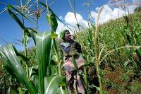 Lantbrukare i Lesotho får omfattande stöd