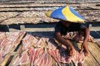 Barnarbete inom fiskeindustrin