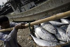 Marknadsregler försvårar för fiskeindustrin i utvecklingsländer