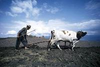 Ny fond för jordbruk och tryggad livsmedelsförsörjning