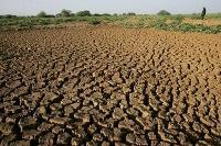 Torka i Sahelområdet hotar livsmedelsförsörjningen