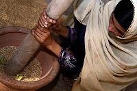 Ökat fokus på jämställdhet i jordbruket