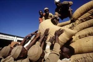 Garantisystem ökar jordbrukarnas inkomster i Niger