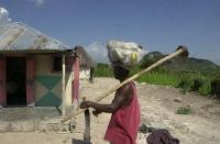 Utsäde och redskap distribuerat till 68 000 hushåll i Haiti