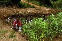 Satsning ökar exporten av ekologiska produkter från Afrika