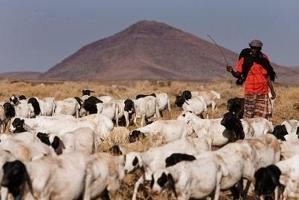 Mot en hållbar boskapssektor