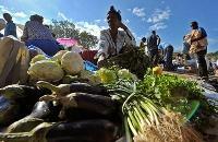 Haiti - återuppbyggnaden efter jordbävningen börjar hos jordbrukarna