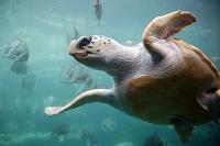 Nya fiskemetoder kan rädda havssköldpaddor