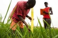 Minskad bekämpningsmedelsanvändning - högre avkastning och ökade inkomster