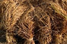 Fokus på låglandsjordbruk skapar bättre förutsättningar i Liberia