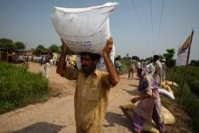 Stora behov av utsäde för pakistanska jordbrukare