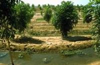 Flera fördelar med att använda återvunnet avloppsvatten inom jordbruket