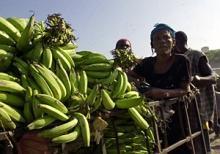 Livsmedelssektorn på Haiti börjar långsamt återhämta sig efter jordbävningen