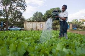 Odling av livsmedel i grönare städer