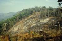 Skogens biologiska mångfald i riskzonen