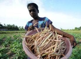 Mot en förbättrad samhällstyrning för en tryggad livsmedelsförsörjning i världen