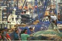 De första världsomspännande riktlinjerna för minskad bifångst och fisk som kastas överbord