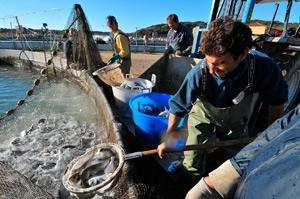 Fiskkonsumtionen på rekordnivå