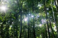 Internationella skogsåret inleds