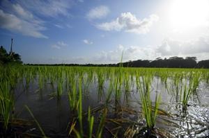 Jordbrukets potential för att mildra global uppvärmning utvärderas