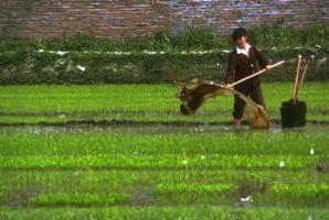 Minskad fattigdom genom odling av energi och mat