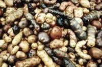 Ministrar enas om översyn av genbank för världens grödor