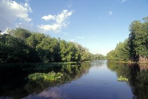 Skogar säkerställer vattentillgång av hög kvalitet