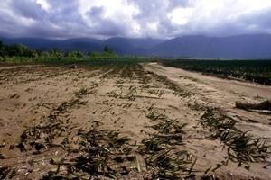 Klimatförändringens långsiktiga effekter kan ge katastrofala följder på livsmedelsproduktionen