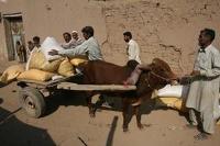 Ny humanitär plattform för tryggad livsmedelsförsörjning lanserad
