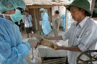 Fågelinfluensan H5N1 kan ta årtionden att utrota