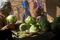 Trädgårdsodling i Kongo:s städer ger skörd för 400 miljoner dollar åt småskaliga odlare