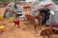 Torka på Afrikas horn hotar miljontals människor