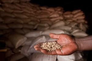 Högre priser på jordbruksprodukter här för att stanna