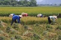 EU, FAO, IFAD och WFP går samman för en tryggad livsmedelsförsörjning och nutrition