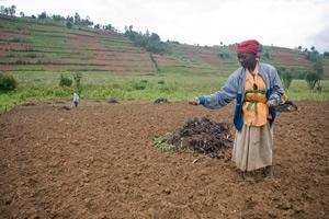 FAO lanserar internationellt nätverk för att säkerställa matjorden