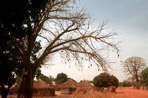 Pris till FAO-stött skogsinitiativ i Gambia
