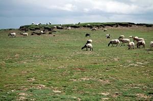 Utsläppsrätter en väg till återställande av skadade betesmarker