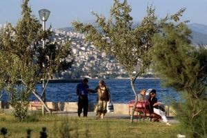 Trädens viktiga roll i en allt mer urbaniserad värld