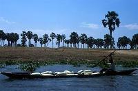 Lokal information om jordbrukets vattenanvändning förebygger problem i Nilens avrinningsområde