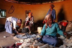 Jordbrukskooperativ för minskad fattigdom och hunger