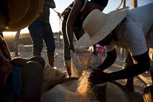 FAO:s matprisindex sjönk i oktober