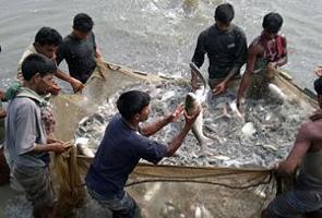 Odlad fisk möter en ökande efterfrågan